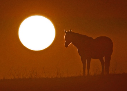 horsies 007 M