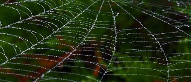 spi web drpz (1)