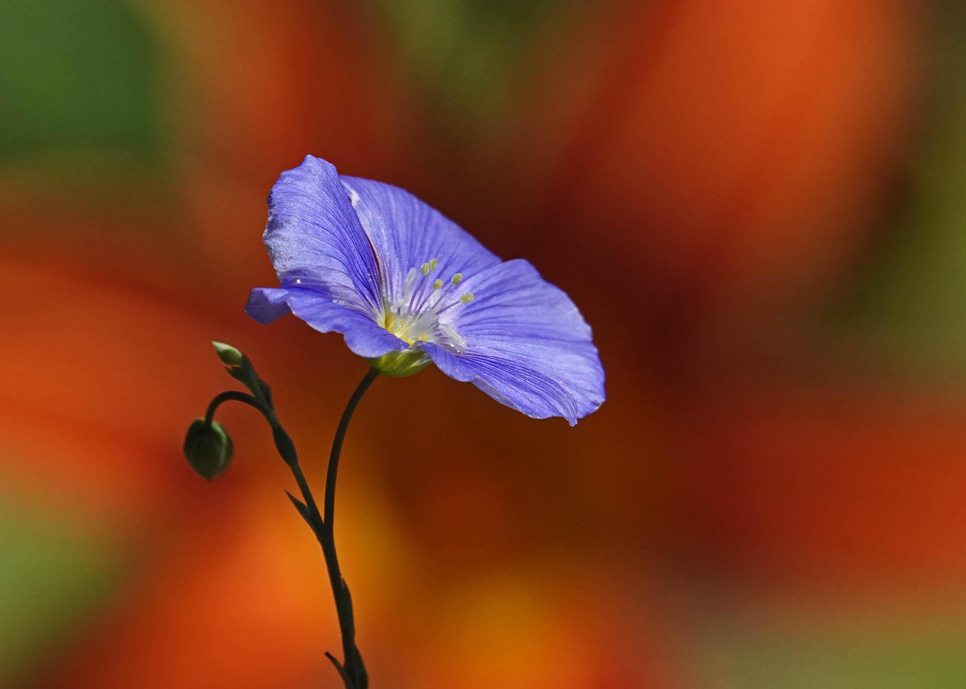 lil blu orng (1)