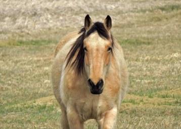 an horse (1)